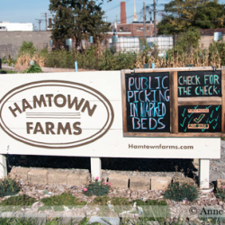 Hamtramck Emergency Manager sweeps away agreements, puts wildly successful urban farm/comm. garden land up for auction