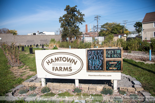 Update on Hamtramck's urban farm Hamtown Farms and how YOU can help them purchase the land they're on