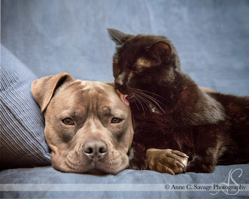 Last Day! 1st Quarter Eclectablog fundraiser - No blather, just dog and cat photos to thank you.