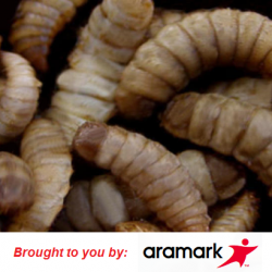 Oh, Aramark, why can't we quit you? More maggots found in prison food.