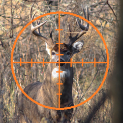 Michigan Republicans reintroduce Ted Nugent-approved bills to allow baiting of deer & elk and reduce fines to $1